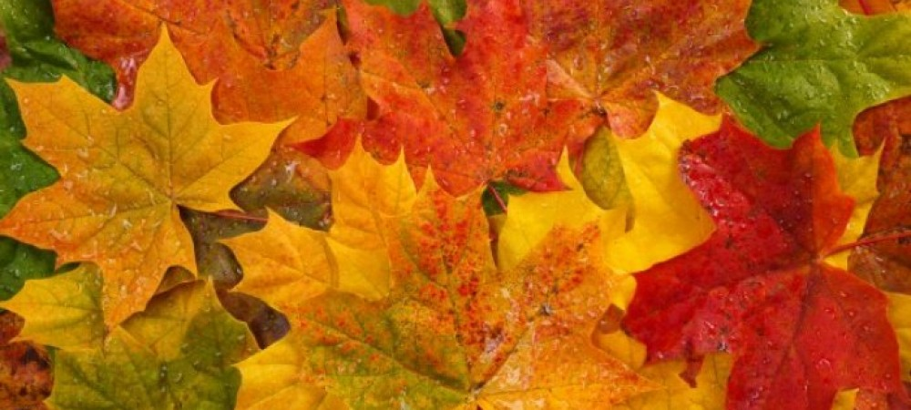 بهترین عکسهای طبیعت پاییزی