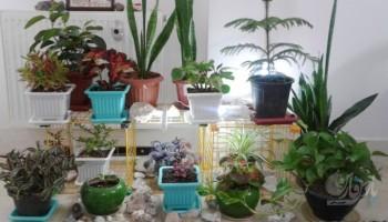 گیاهان شگفت انگیزی که نگهداری آن ها در خانه معجزه می کند
