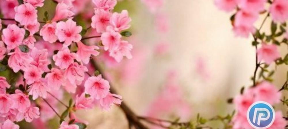 طب سنتي: تدابیری برای شروع فصل بهار