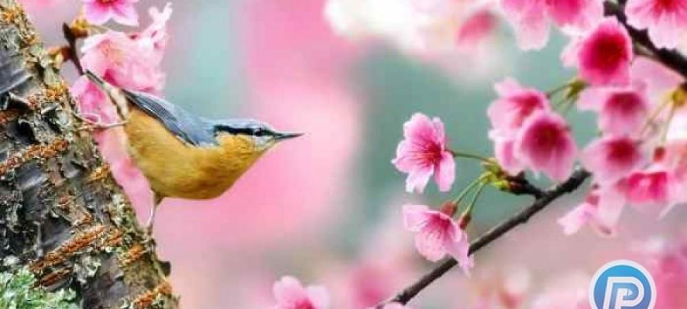 طب سنتي: پیشگیری از بیماریهای فصل بهار