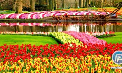 معروف ترین باغ گل جهان کجاست؟
