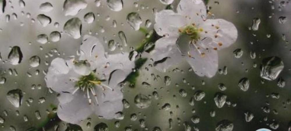 بارش باران بهاری در برخی استانها
