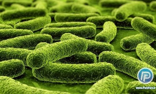 درمان یبوست با باکتری مهندسی شده