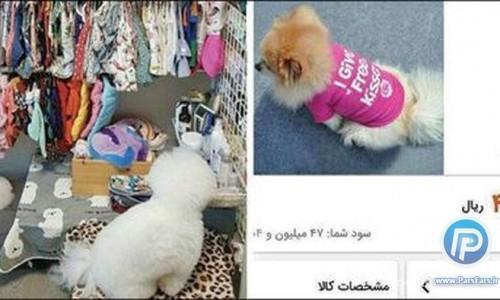 یک سگ اشرافی با تیشرت ۴ میلیون و ۷۰۰ هزار تومانی در ایران!