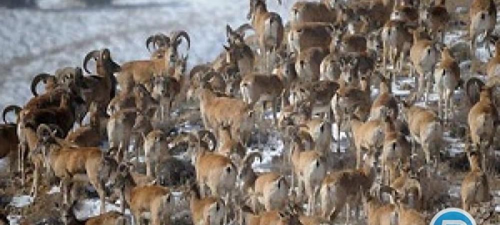 ماجرای کشتار بدون تنفگ حیوانات در جنگل های شمال کشور