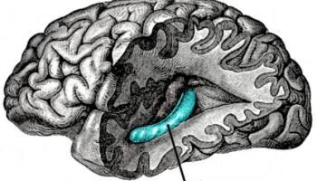 مغز چگونه ما را با بوها به خاطرات دور میبرد؟